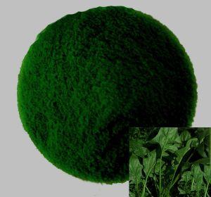Spinach Powder (80--100)