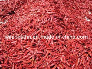 Tientsin Chili