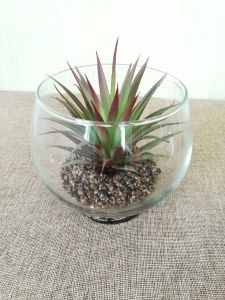 Artificial Plants and Flowers of Mini Plant Succulent Gu-SD0285 pictures & photos