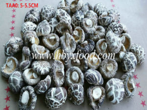 5-5.5cm High Nutrition Dried White Flower Mushroom pictures & photos