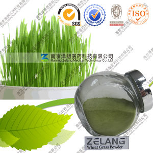 Supplier Amazing Wheat Grass Powder Bulk Wheatgrass Powder pictures & photos