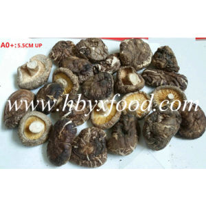 5.5cm up Dried Nutritious Smooth Shiitake Mushroom pictures & photos