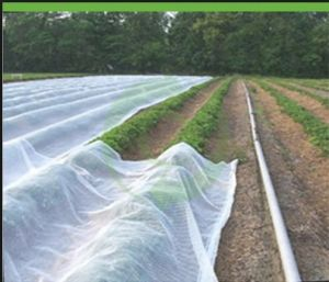 Plant Cover with 100%Polyprpopylene Spunbond Nonwoven Fabric pictures & photos