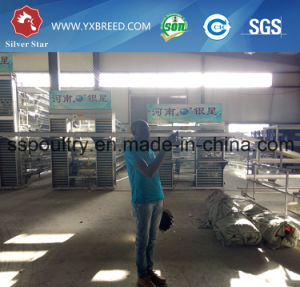Chicken Cages for Poultry Farm in Africa pictures & photos