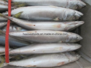 Chinese Land Frozen Mackerel Price Mackerel Fish pictures & photos