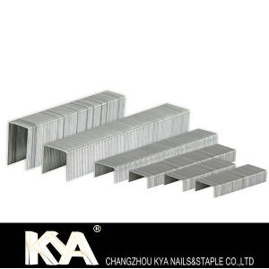 24/6 Galvanized Office Staples Pins pictures & photos