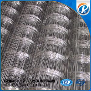 Good Quality Electro Galvanized Welded Wire Mesh pictures & photos