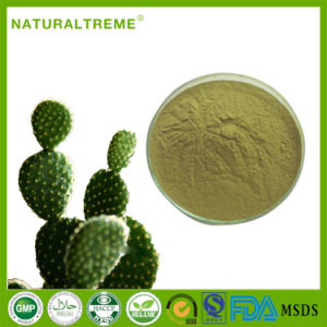 Plant Extract Weight Reducing Cactus Leaves Powder 10: 1 pictures & photos