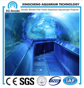 Larger Transparent Marine Acrylic Aquarium Tunnel pictures & photos