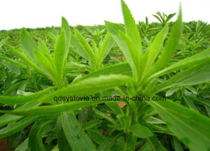 High Quality Steviosides & Rebaudioside a - Stevia pictures & photos