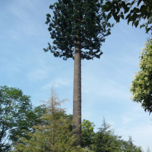 Pine Palm Coconut Bionic Antenna Monopole Pole Tower pictures & photos