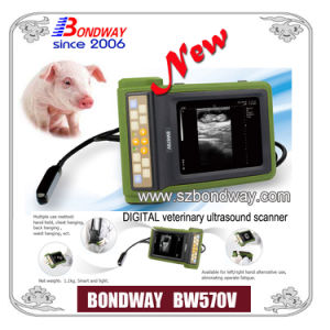Bw570V Veterinary Ultrasound Scanner for Animals pictures & photos