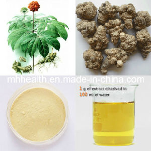 Sanqi Extract Panax Notoginseng Extract High Blood Pressure Notoginsenosides 20 PCS/Per 500 G pictures & photos