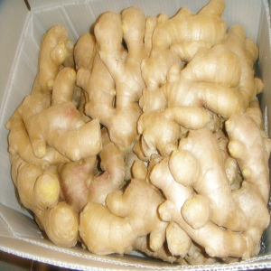 Air Dried Ginger /Price of Dried Ginger /Air Dried Ginger Importers pictures & photos
