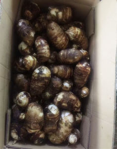 2017 Chinese New Crop Fresh Taro pictures & photos