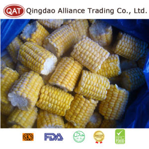 High Quality IQF Frozen Sweet COB Corn pictures & photos