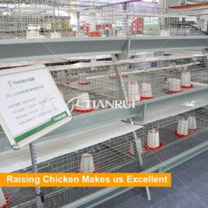 Hot Selling H Frame Chicken Poultry Farm Cage for Pullets pictures & photos