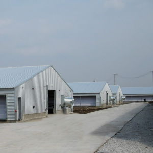 Prefab Poultry Chicken House with Auto Feeding and Drinking Equipments pictures & photos