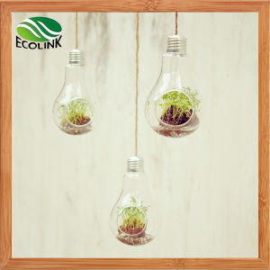 Hanging Light Bulb Shaped Glass Vase pictures & photos