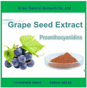 High Quality Grape Seed Extract Powder 95%OPC for Sale pictures & photos
