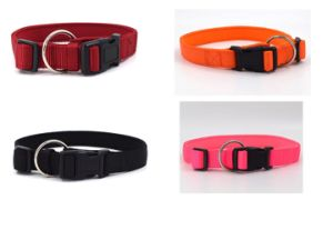 High Quality Nylon Colorful Dog Collar pictures & photos