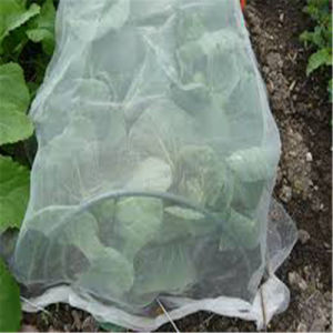 White Fleece Vegetables Tunnel pictures & photos