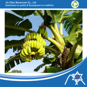 PP Nonwoven Fabric for Banana Bag pictures & photos