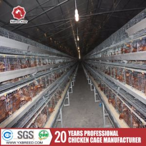 Silver Star Automatic Layer Chicken Cage System pictures & photos