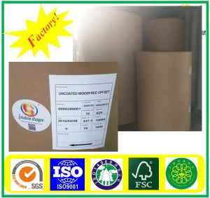 White Coated Printing Brochure paper 70g pictures & photos
