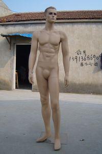 High Quality Fiberglass Mannequins Torso 1033