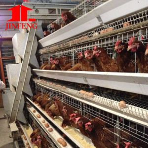 Jinfeng Poultry Equipment a Type Chicken Cage Hot Sale in Nigeria pictures & photos