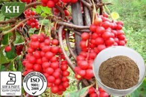 Schisantherina Schizandra Extract (Schisandra chinensis) pictures & photos