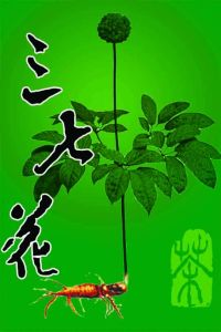 Sanqi Extract, Panax Notoginseng Extract, Notoginsenosides See Larger Image  Sanqi Extract Panax Notoginseng Extract Notoginsenosides pictures & photos