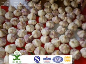 Normal White Garlic Packing in 10kgs Loose Carton Box