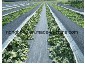 Plastic Ground Cover for Garden pictures & photos
