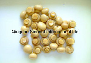 400g/200g Canned Mushroom (HACCP, ISO, BRC, HALAL, KOSHER) pictures & photos