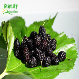 Hot Greensky Mulberry Fruit Extract Antican pictures & photos