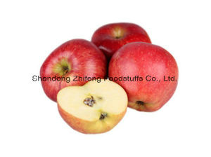 Fresh New Red Star Apple for Exporting pictures & photos