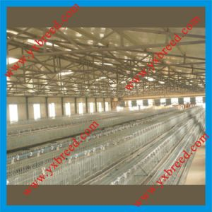 how to make poultry houses layer