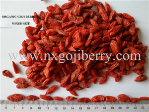Ningxia Organic Goji Berry (Low SO2) pictures & photos