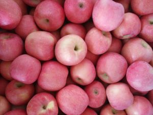 Offering Best FUJI Apple of Shandong Province pictures & photos