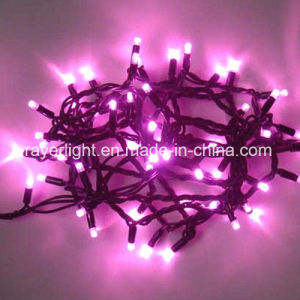 200LEDs 20m Clear Cord Cluster Strand Light Steady pictures & photos