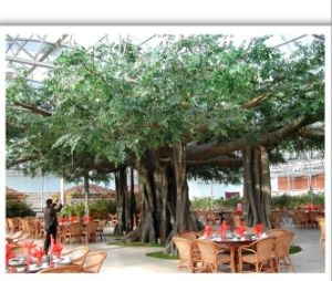 Artificial Fiberglass Large Banyan Landscape Garden Trees pictures & photos