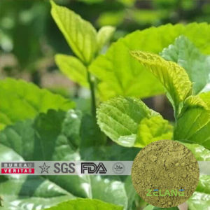 100% Cold Water Soluble Mulberry Leaf Extract pictures & photos