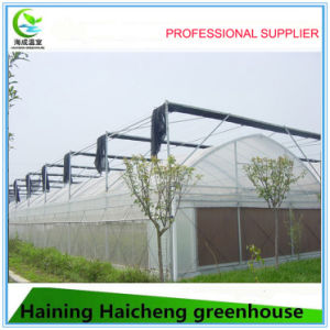 High Quality Large Size Multi-Span Agricultural Commercial Greenhouses pictures & photos