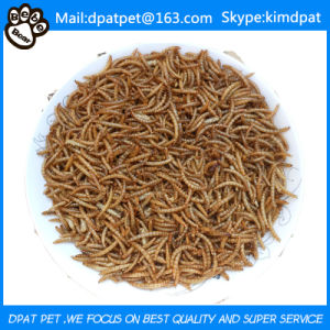 Bulk Dried Mealworms Fish Reptile Wild Bird Food pictures & photos
