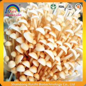 Enokitake Extract pictures & photos