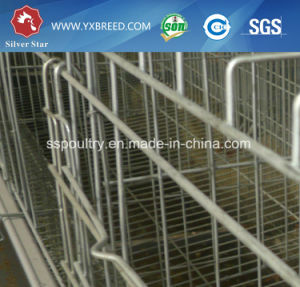 Top 10 Selling Egg Collection System Chicken Cage for Sale pictures & photos