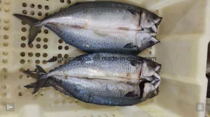 New Landed Frozen Fish Pacific Mackerel Seafood pictures & photos