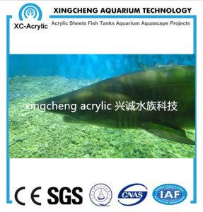 Acrylic Material Glass Sheet Aquarium Price pictures & photos